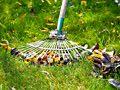 Rasenpflege für den Garten